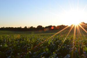 Farm Insurance in Glencoe, MN